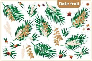 Satz Vektorkarikaturillustrationen mit exotischen Früchten, Blumen und Blättern der Datumsfrucht lokalisiert auf weißem Hintergrund vektor