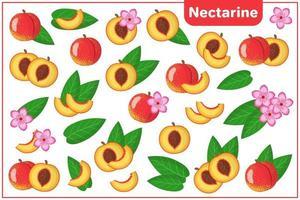 Satz von Vektorkarikaturillustrationen mit exotischen Nektarinenfrüchten, -blumen und -blättern lokalisiert auf weißem Hintergrund vektor