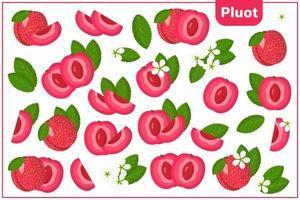 Satz Vektorkarikaturillustrationen mit exotischen Früchten, Blumen und Blättern pluot lokalisiert auf weißem Hintergrund vektor