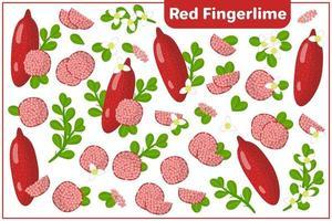 Satz von Vektorkarikaturillustrationen mit exotischen Früchten, Blumen und Blättern des roten Fingerlimus lokalisiert auf weißem Hintergrund vektor