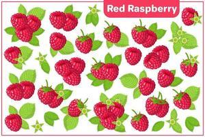 Satz Vektorkarikaturillustrationen mit exotischen Früchten der roten Himbeere lokalisiert auf weißem Hintergrund vektor