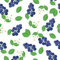 Nahtloses Muster der Vektorkarikatur mit exotischen Früchten, Blumen und Blättern von Amelanchier oder Shadberry auf weißem Hintergrund vektor