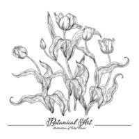 Skizze Blumen dekorative Set. Tulpenblumenzeichnungen. Schwarzweiss mit Strichgrafiken lokalisiert auf weißem Hintergrund. handgezeichnete botanische Illustrationen. Elemente Vektor. vektor