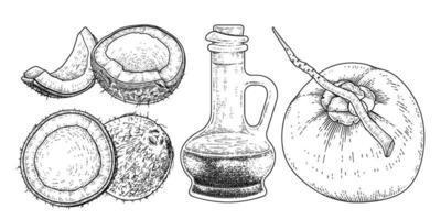 ganze halbe Schale Fleisch und Öl der Kokosnuss Hand gezeichnete Vektor Retro-Illustration