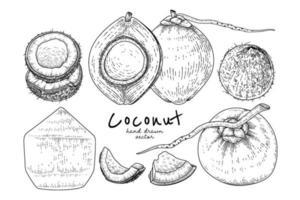 ganze halbe Schale und Fleisch der Kokosnuss handgezeichneten handgezeichneten Skizze Retro-Stil vektor