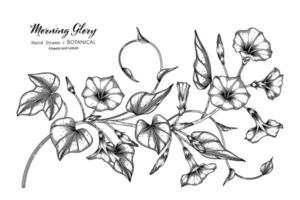 gezeichnete botanische Illustration der Winde der Blume und des Blattes der Hand mit Strichgrafiken. vektor
