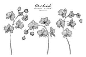 Orchideenblume und Blatthand gezeichnete botanische Illustration mit Strichzeichnungen. vektor