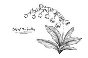Maiglöckchen Blume und Blatt Hand gezeichnete botanische Illustration mit Strichzeichnungen. vektor