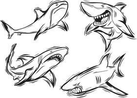 wütender Hai schwarz und weiß eingestellt vektor