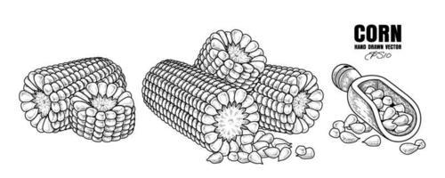 Satz reife Maishand gezeichnete Illustration vektor
