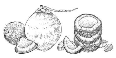 ganze halbe Schale und Fleisch der Kokosnusshand gezeichneten Vektor-Retro-Illustration vektor