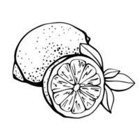 Zitrone lokalisiert auf einem weißen Hintergrund. Zitrone und Zitronenscheibe. Stärkung des Immunsystems und der Gesundheit. Hand gezeichnete Illustration im Gekritzelstil vektor