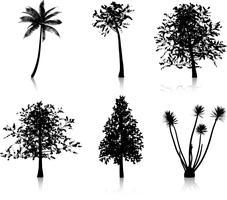 Träd silhuetter