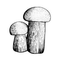 Steinpilz lokalisiert auf einem weißen Hintergrund. ein essbarer Schwammpilz mit Stiel und Kappe. köstliche Herbstwaldpilze. veganes Essen. Hand gezeichnete Vektorillustration vektor