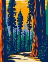 Simpson-Reed-Hain von Küstenmammutbäumen in Jedediah Smith State Park Teil der Redwood National- und State Parks in Kalifornien wpa Plakatkunst vektor