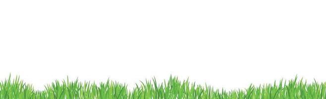 grünes saftiges Gras auf einem weißen Hintergrund vektor