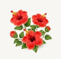 realistisch schöne Hibiskusblüte vektor