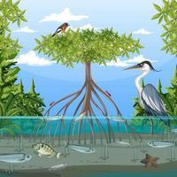Mangrovenwaldszene tagsüber mit Tieren vektor