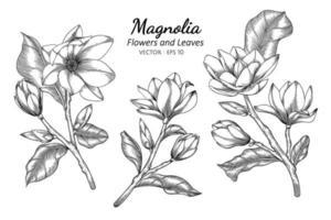 Magnolienblumen- und Blattzeichnungsillustration mit Strichzeichnungen auf weißem Hintergrund. vektor