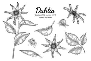 Satz gezeichnete botanische Illustration der Dahlienblume und des Blattes Hand mit Strichgrafiken auf weißem Hintergrund. vektor