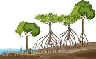 Struktur des Mangrovenwaldes auf weißem Hintergrund vektor