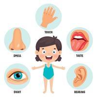 Fünf-Sinne-Konzept mit menschlichen Organen vektor