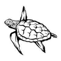 Meeresschildkröte lokalisiert auf einem weißen Hintergrund. handgezeichnete Vektorillustration vektor