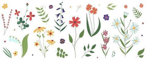 Sammlung von wilden blühenden Wiesenblumen flache bunte botanische Vektorillustrationsblumen lokalisiert auf weißem Hintergrundsatz von dekorativen Blumenmusterelementen vektor