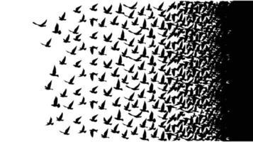 fliegende Vögel Silhouetten auf weißem Hintergrund vektor