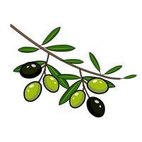 schwarze und grüne Oliven auf einem Zweig vektor