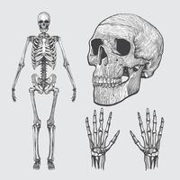 Skelett Linocut Vector Pack