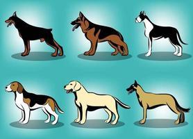 Farbvektorillustration verschiedener Hunde wie Deutscher Schäferhund Deutsche Dogge Dobermann belgischer Malinois Labrador Retriever und Beagle ein Satz von sechs Bildern vektor