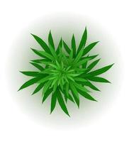 Cannabis-Marihuana-Blatt-Arzneimittel-Legalisierungsvektorillustration lokalisiert auf weißem Hintergrund vektor