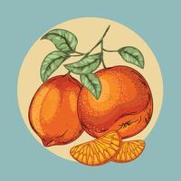 Weinlese-Illustration der schönen Zitrusfrucht oder der Zitrone mit Blatt vektor