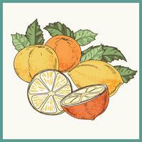 Weinlese-Hand gezeichnete Illustration der Zitrusfrucht oder der Zitrone mit Pointillism-Art vektor