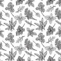 Gewürze und Kräutermuster. aromatische Gewürze, gesunde Kräuter. Basilikum, Oregano, Petersilie, dill.handgezeichnete Vektorillustration. vektor