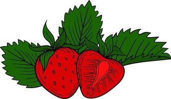 Erdbeer-Beere lokalisiert auf weißem Hintergrund vektor