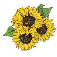 Sonnenblume lokalisiert auf weißem Hintergrund vektor