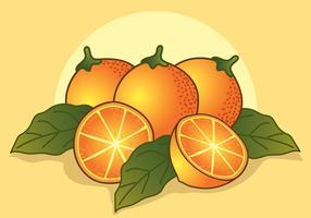 Weinlese-Zitrusfrucht-Illustrationen vektor