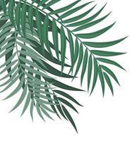 abstrakter Hintergrund mit Palmblättern vektor