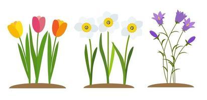 Frühlingstulpe, Glockenblume und Narzisse. Blumen Hintergrund vektor