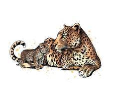 Porträt eines Leoparden von einem Spritzer von Aquarellhand gezeichneter Skizzenvektorillustration von Farben vektor