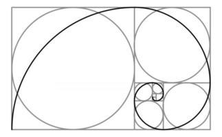 Kreise mit goldenem Schnitt von Fibonacci und Spiralschablone vektor