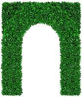 grüne Efeu Traubenbogen Textur vektor