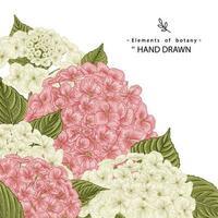 hochdetaillierte handgezeichnete botanische Illustrationen der rosa und weißen Hortensienblume vektor