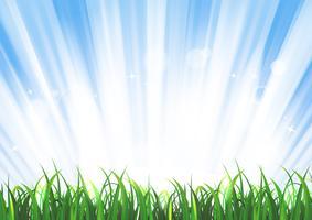 Frühlings-oder Sommer-Sonnenaufgang-Gras-Landschaft vektor