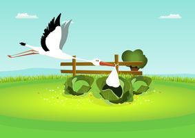 Stork levererar baby i kål