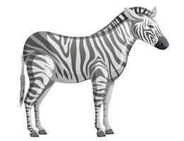 Zebra in schwarzen und weißen Streifen. Vektor-eps10 vektor