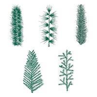 handgezeichnetes Set grüner Tannenzweig Kiefer vektor