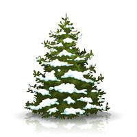 Julgran med snö